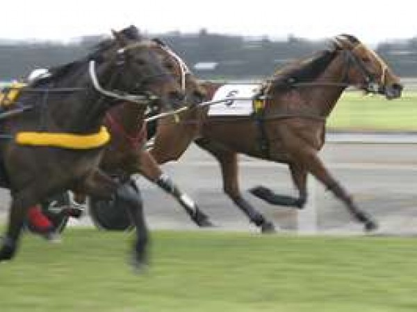 Peak Hill Harness Racing Club
